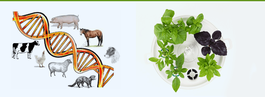 Selective Breeding in Animals and Plants Assignment Help ...